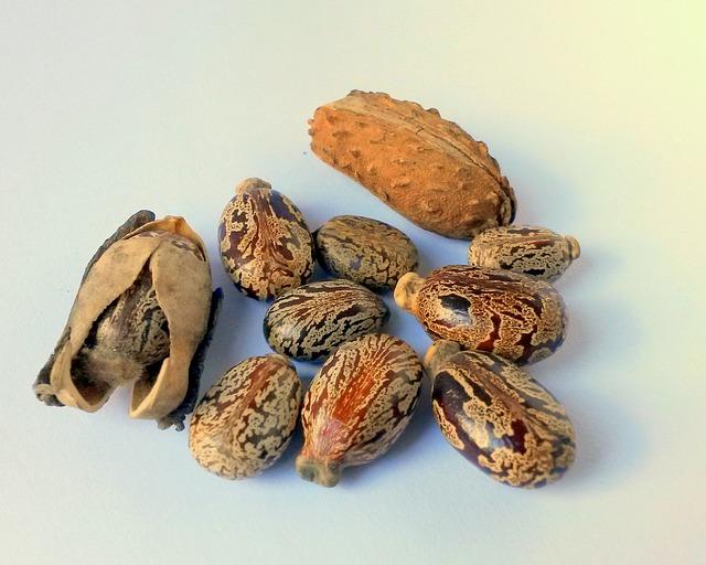 castor-oil-seeds-327186_640